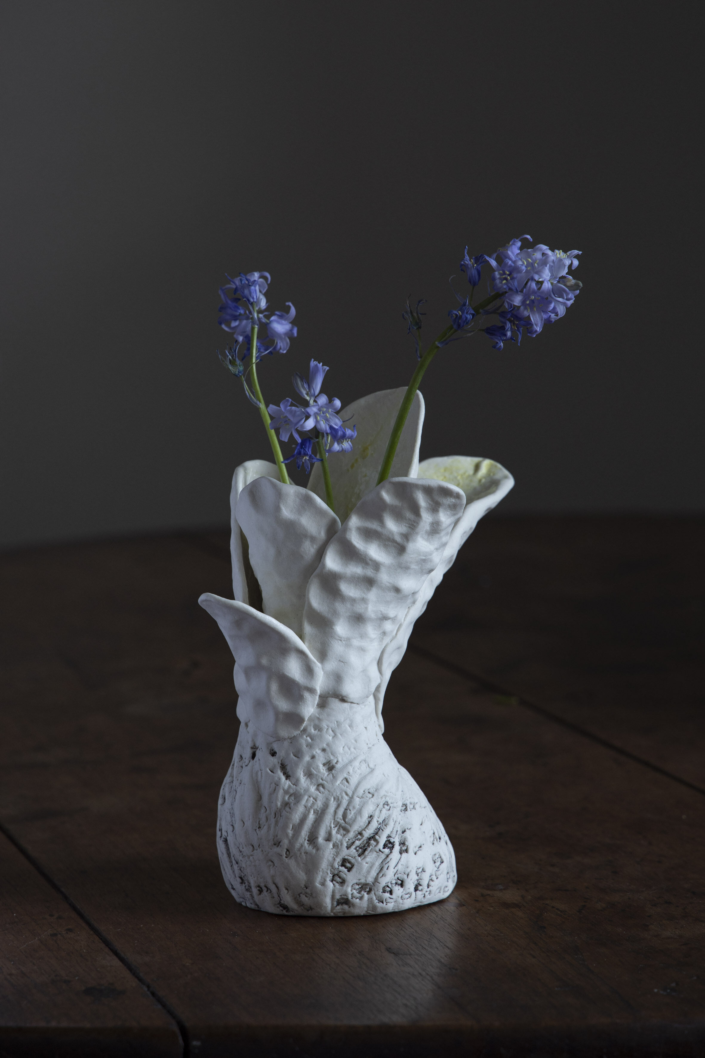 Robyn Phelan.Conversation with blackwattle with bluebells